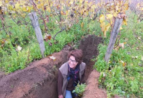 Bourgogne Côtes du Couchois… et pourquoi pas en blanc ?
